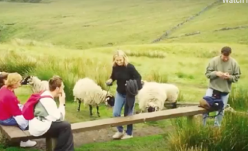 a field with sheep and students