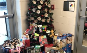 Christmas tree with donated pet supplies